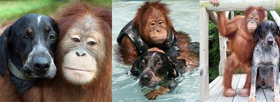 Emocione-se com essa história de superação entre duas espécies totalmente diferentes, mas que foram capazes de encontrar na amizade um motivo para viver.