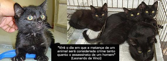 A adoção de gatos pretos é sempre mais difícil, pois eles são sacrificados em rituais que se dizem religiosos, alguns de forma muito cruel e dolorosa.